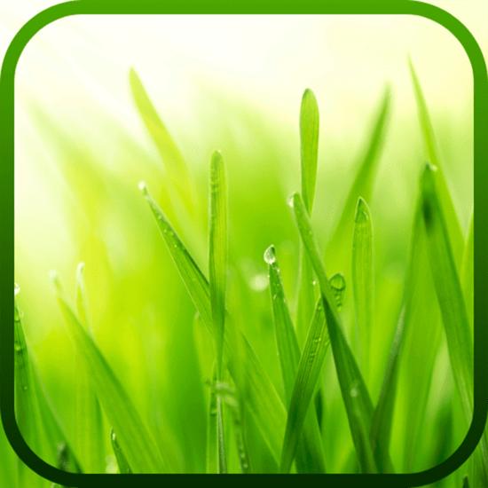Eksamensro app ikon